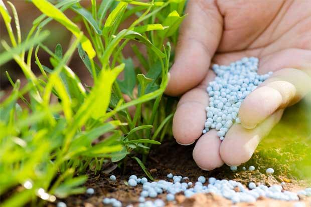 IRET-UNA pretende eliminar uso de plaguicidas altamente peligrosos a través de proyecto