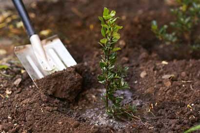 Caja analiza asegurar trabajadores agrícolas, recolectores de café y otros