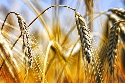 Países analizaran situación de alimentos en América Latina