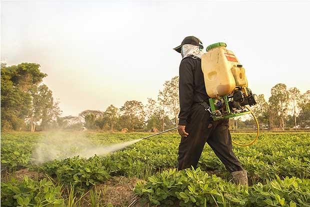 Debate mundial sobre plaguicidas se dará en el país