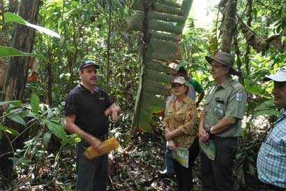 Ministerio de Ambiente creará clúster forestal