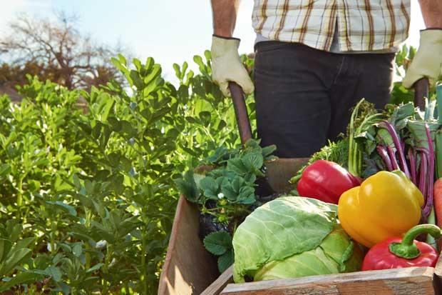 Caja hace llamado sobre hábitos alimenticios