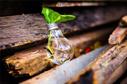 Concurso premiará proyectos 100% naturales