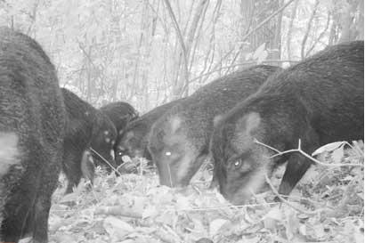 Las Pailas II registra especie en peligro de extinción