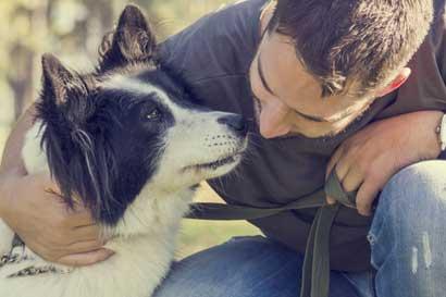 Iniciativa popular de Bienestar Animal es aprobada en primer debate