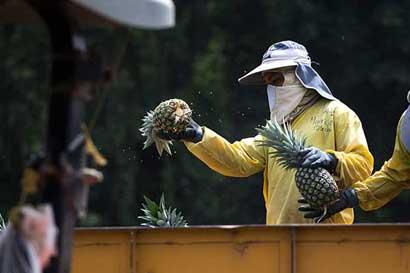 Uso de herbicida bromacil será prohibido