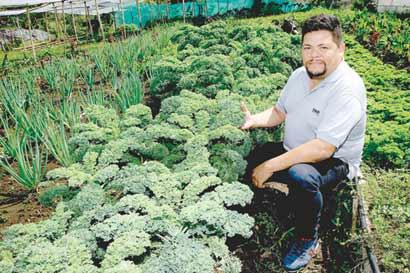 Exportaciones orgánicas crecen pero no se diversifican