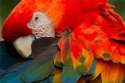 Costa Rica con casi 4 mil especies amenazadas