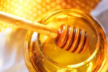"Fundazoo impartirá taller de mantenimiento de ""Hoteles de abeja"""