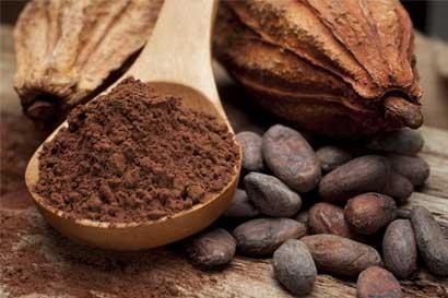 Cacao fino presenta oportunidades para exportadores nacionales