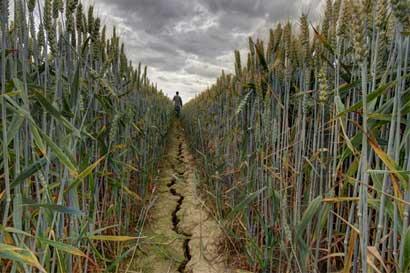 Istmo fortalece estrategia contra cambio climático en la agricultura