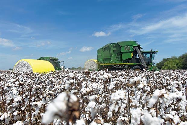 Se dispara la producción de algodón desde la India hasta EE.UU.