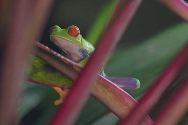 Costa Rica lanzó campaña global de nueva identidad turística