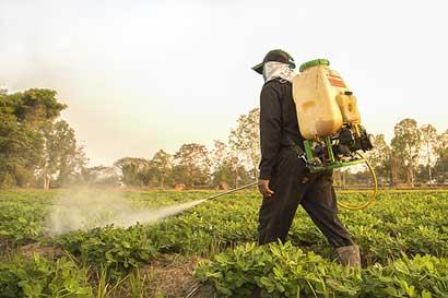 Buscan eliminar plaguicidas peligrosos en cultivos de café