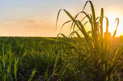 Estados Unidos extiende plazo para lograr acuerdo sobre azúcar con México