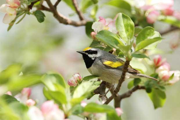 Costa Rica pagará por servicios ambientales basados en aves