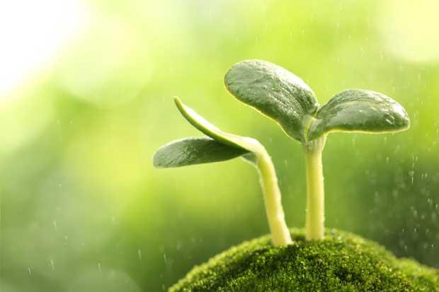 INS recibe reconocimiento de excelencia ambiental