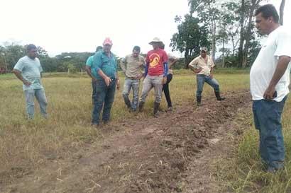 Arroceros buscan alternativas para retención de agua de lluvia