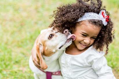 CNE presenta acciones de protección animal ante emergencias