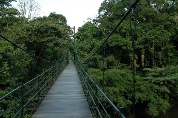 Donación permitirá mejoramiento de Estación Biológica La Selva