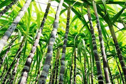 México y Estados Unidos estarían próximos a un acuerdo final sobre azúcar