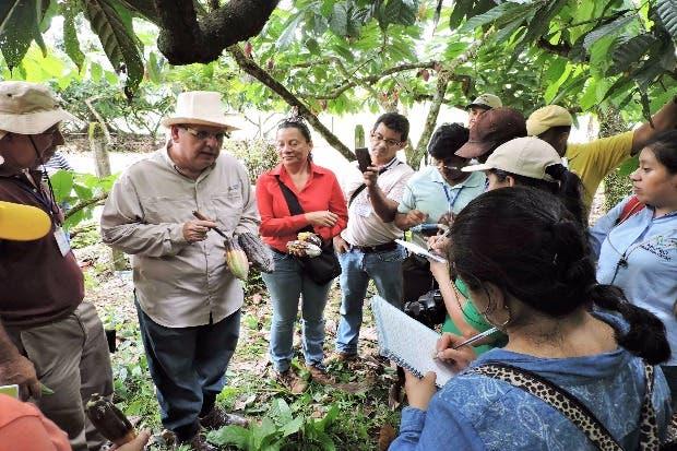 El CATIE y Corea capacitan técnicos para estimular producción de cacao