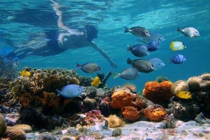 Campaña internacional buscará fondos para preservar océanos del país
