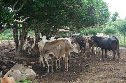 MAG e INA desarrollarán una propuesta país de ganadería sostenible