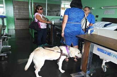 Perros guías tienen aval para ingresar a hospital de San Carlos