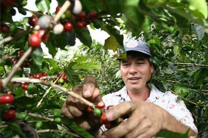Cafetaleros deben apostar a innovación y manejo técnico de fincas