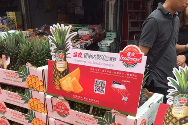 Piña nacional ya se comercializa en China