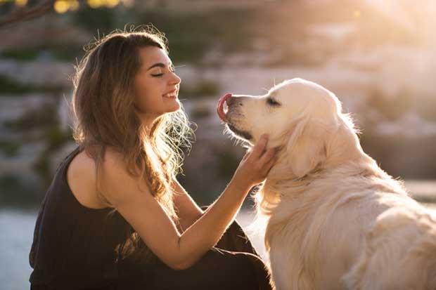 Aplicación facilitará acceso a información de mascotas
