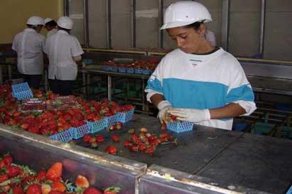 Sector fresero cuenta con manual para garantizar productos más sanos y competitivos