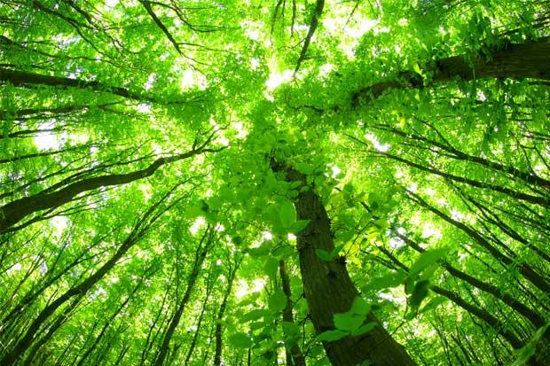 UCR realizará simposio sobre cambio climático