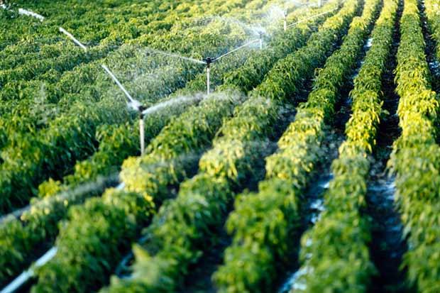 Meteorológico minimiza efectos de El Niño en el agro