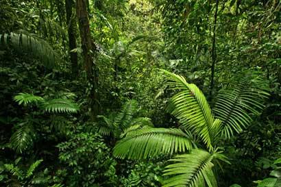 Seminario expondrá maneras de transformar materia forestal en energía