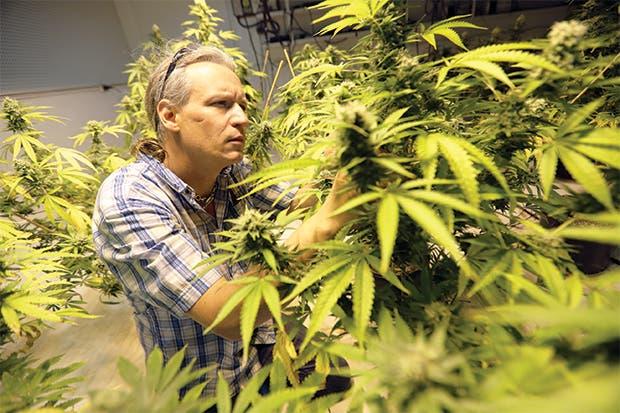 Frenesí canadiense en mercado de marihuana podría acabar muy mal