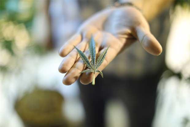 Uruguay empieza a vender marihuana estatal en farmacias