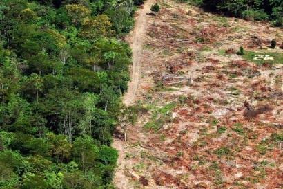 Alemania revisará fondo contra deforestación en la Amazonía