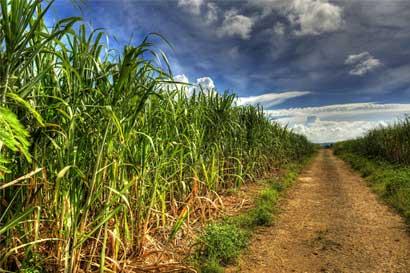 Diputados aprueban ley para reformar industria azucarera