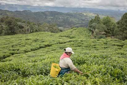Tras conflicto, Colombia busca convertirse en potencia agrícola