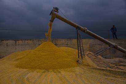 Batalla entre Brasil y EEUU por exportación de maíz es inminente