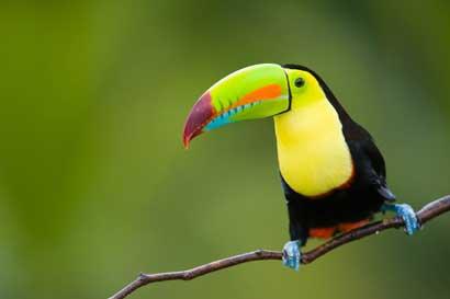 Observatorio de Aves se convierte en primera ONG ambiental en recibir sello de Marca País