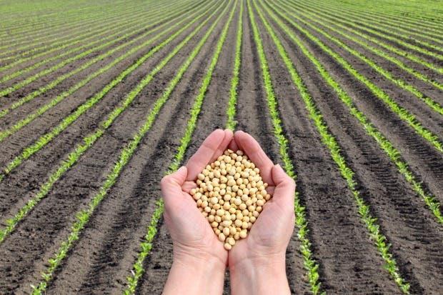Sector agro pide recalificar estatus de trabajadores extranjeros
