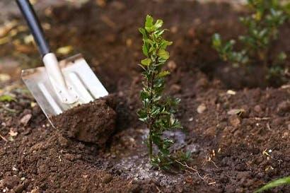 IICA pone a disposición curso virtual sobre seguros agrícolas
