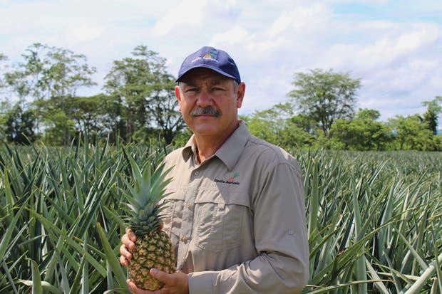 Marca país respalda la calidad de las piñas de Upala Agrícola