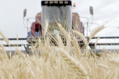 Comerciantes rusos consideran primeras ventas de trigo a Cuba