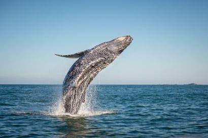 Marina Pez Vela ofrece tours para ver ballenas