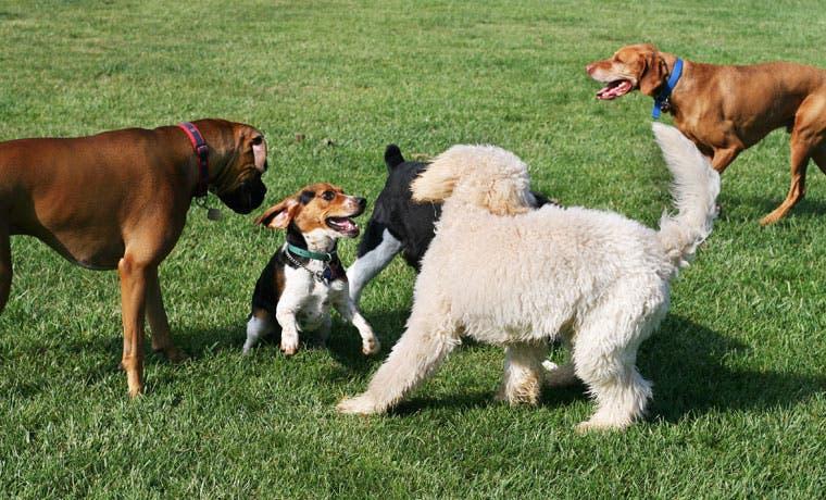 Marca de productos para perros inaugurará su tienda hoy