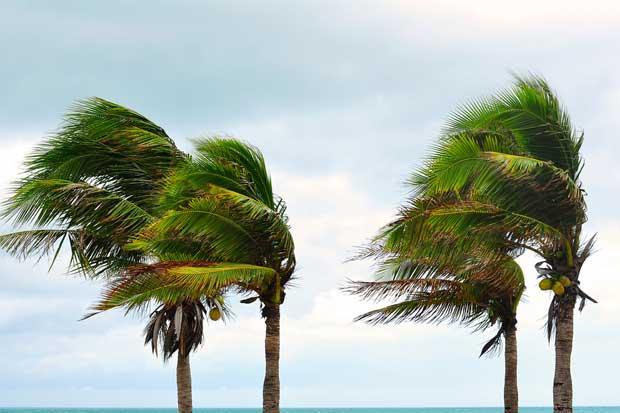 Reforma obligaría a contemplar el cambio climático en todas las políticas ambientales